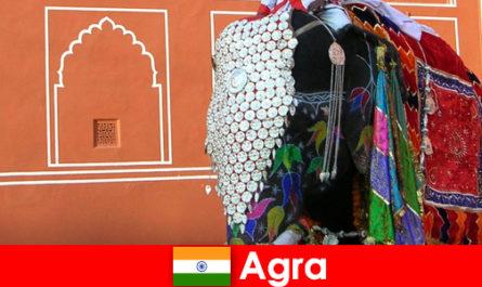 Belantara pelancong di Agra suka pelbagai haiwan