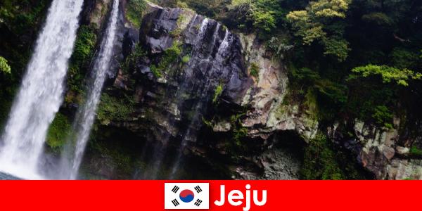 Jeju di Korea Selatan pulau gunung berapi subtropika dengan hutan yang menakjubkan untuk warga asing