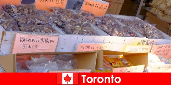 Toronto dan gastronomi yang sangat pelbagai tidak membuat kebuluran pengembara