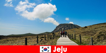 Pelancong mendaki melalui landskap semula jadi yang hebat di Jeju Korea Selatan