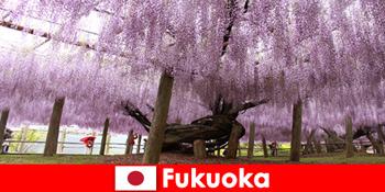 Lawatan alam semula jadi untuk orang yang tidak dikenali dalam sifat tidak disentuh Fukuoka Jepun