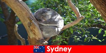 Destinasi Sydney Australia di zoo eksotik dengan pengalaman semalaman