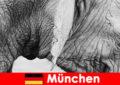 Lawatan khas untuk pelawat ke zoo yang paling asli di Jerman Munich